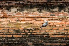 Ptak i cegła Obraz Stock