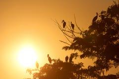 Ptak i drzewna sylwetka Zdjęcia Royalty Free