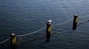 Ptak i jezioro w London zdjęcie royalty free