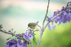 Ptak i kwiaty Zdjęcie Royalty Free