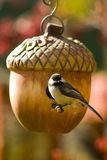 ptak jej gniazdo Zdjęcia Royalty Free