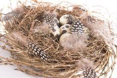 ptak jest gniazdo Obraz Stock