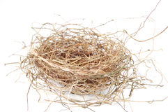 ptak jest gniazdo Fotografia Royalty Free