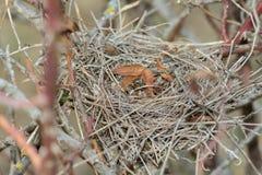 ptak jest gniazdo Zdjęcia Stock
