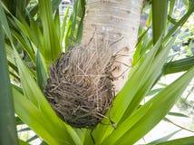 Ptak jest gniazdowy na drzewie obrazy stock