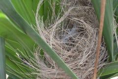 Ptak jest gniazdowy na drzewie fotografia royalty free