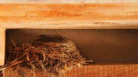 Ptak kłaść jajka w gniazdeczku zbiory