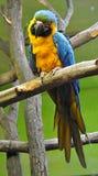 Ptak - kolorowa papuga Zdjęcia Stock