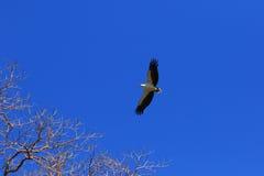ptak, który uwalnia Zdjęcia Stock