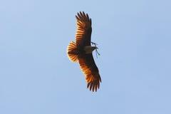 ptak, który uwalnia Fotografia Stock