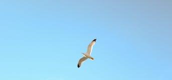 ptak, który uwalnia Obrazy Stock