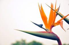 ptak kwiaty do raju Obraz Royalty Free
