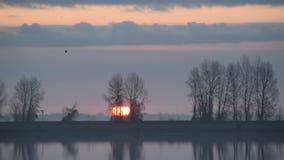 Ptak lata nad wodą przez ramy podczas wschodu słońca zbiory