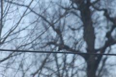 ptak linii moc Obrazy Royalty Free