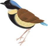 ptak mały Fotografia Royalty Free