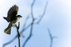 ptak mały Fotografia Stock