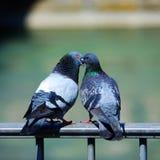 ptak miłości Fotografia Royalty Free