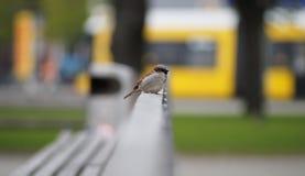 Ptak na ławce fotografia royalty free