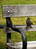 Ptak na ławce zdjęcia stock