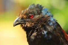 ptak na czerwono, zdjęcie royalty free