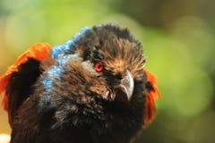 ptak na czerwono, Fotografia Stock