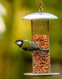 Ptak na dozowniku Fotografia Stock