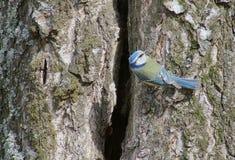 Ptak na drzewie Obraz Royalty Free