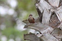Ptak na drzewie fotografia stock