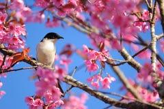 Ptak na drzewie Obrazy Stock