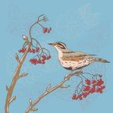 Ptak na drzewie royalty ilustracja