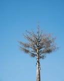 Ptak na drzewie Zdjęcie Royalty Free
