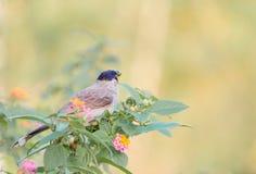 Ptak na drzewie Fotografia Royalty Free