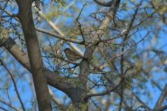 Ptak na drzewie obrazy royalty free