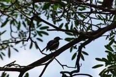 Ptak na drzewie w ogródzie obraz royalty free
