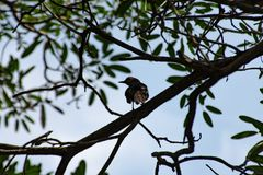 Ptak na drzewie w ogródzie fotografia stock