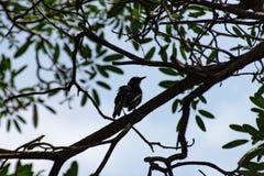 Ptak na drzewie w ogródzie fotografia royalty free