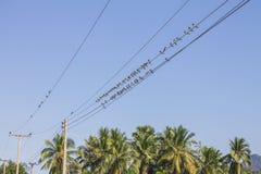 Ptak na elektrycznym drucie zdjęcia stock