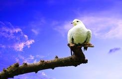 Ptak na gałąź Obraz Stock