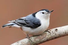 Ptak Na gałąź zdjęcie stock