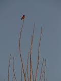 Ptak na gałąź Zdjęcia Stock