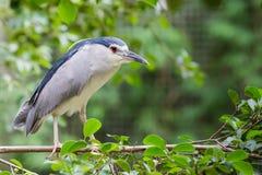 Ptak na gałąź Zdjęcia Royalty Free