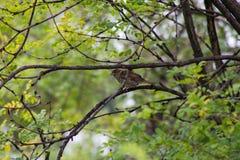 Ptak na gałąź Fotografia Royalty Free