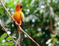 Ptak na gałąź fotografia stock