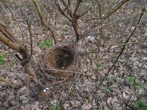 Ptak na gałąź drzewo wśród zielonego ulistnienia Obraz Royalty Free