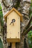 Ptak na gniazdeczka pudełku Zdjęcia Stock
