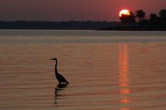 Ptak na jeziorze Obraz Royalty Free
