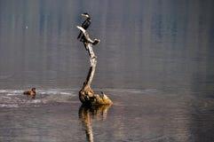 Ptak na jeziorze w Glenorchy, Nowa Zelandia Zdjęcie Royalty Free