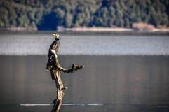 Ptak na jeziorze w Glenorchy, Nowa Zelandia Fotografia Stock