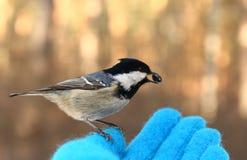 Ptak na mój ręce Zdjęcie Stock