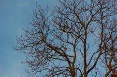 Ptak na nagim drzewie fotografia stock